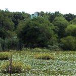 Clay Pit Ponds State Park Preserve